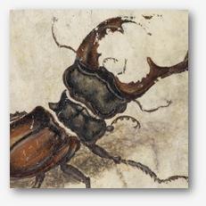 Krafttier käfer
